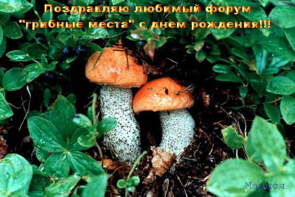 http://s4.uploads.ru/t/t2FXO.jpg