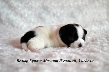 http://s4.uploads.ru/t/tzuJF.jpg