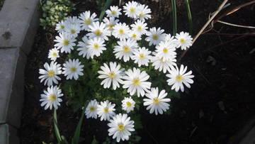 Весна идет!!! - Страница 39 Vs0ua