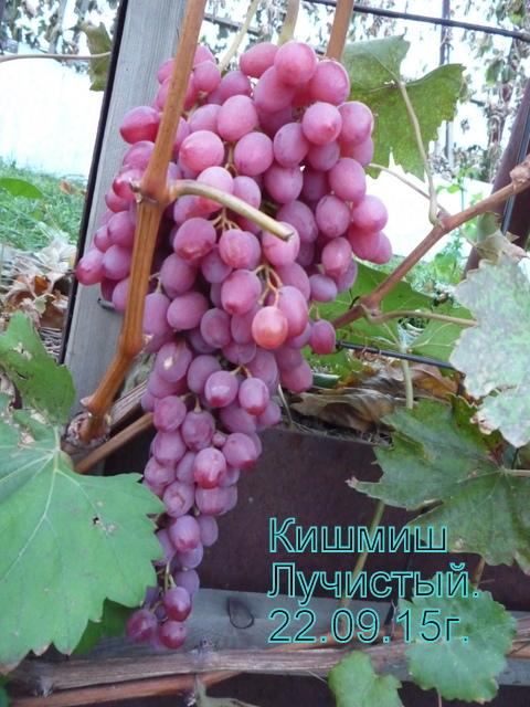 http://s4.uploads.ru/t/w8lPe.jpg