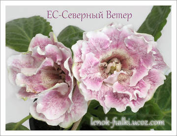 http://s4.uploads.ru/t/wyjAr.jpg