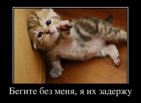 http://s4.uploads.ru/t/ysd3k.jpg