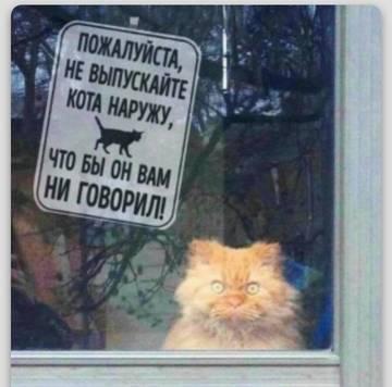 http://s4.uploads.ru/t/z6GHd.jpg