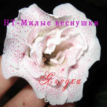 http://s4.uploads.ru/t/zNFcj.jpg