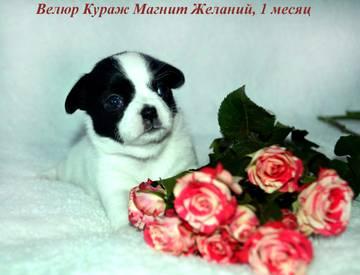 http://s4.uploads.ru/t/zT13r.jpg