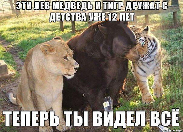 http://s4.uploads.ru/tuqA1.jpg
