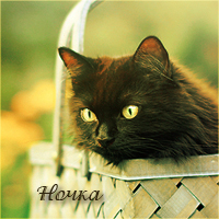 http://s4.uploads.ru/uW76z.jpg