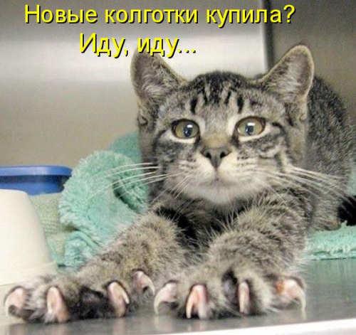 http://s4.uploads.ru/uvMxJ.jpg