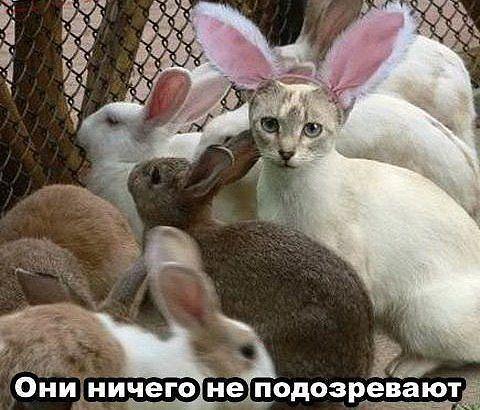 http://s4.uploads.ru/zXZDK.jpg