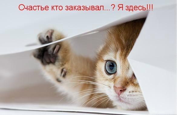 http://s4.uploads.ru/KLh69.jpg