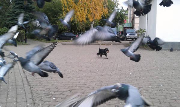 http://s4.uploads.ru/t/MPxaH.jpg
