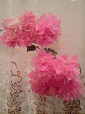 http://s4.uploads.ru/t/PuQsI.jpg