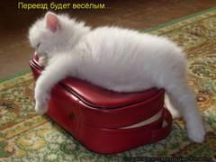 http://s4.uploads.ru/t/eLpbA.jpg