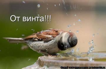 http://s4.uploads.ru/t/kwVhF.jpg